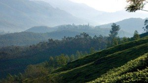 munnar-hilltops-kerala-indian
