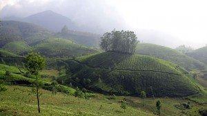 munnar-teaplantaion-kerala-famous tourist places