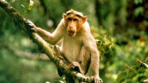 aralam_wildlife_sanctuary20131106121109_140_1