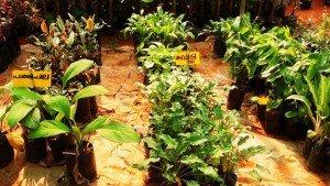 boys_town_a_herbal_garden20131128113908_284_2