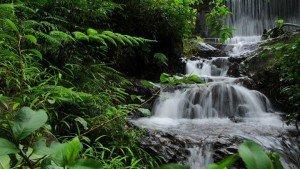 chethalayam_falls_wayanad20131127120234_557_1