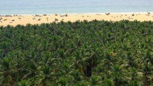 chowara_beach_kovalam20131105170224_349_1