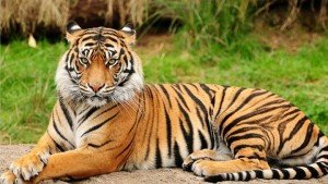indian---tigre-trail-_-tour-package-image (1)