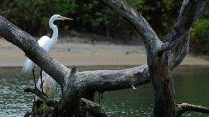 kadalundi_bird_sanctuary20131111113120_6_1