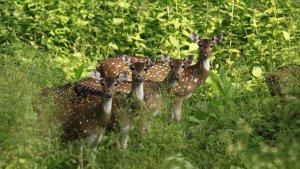 muthanga_wildlife_sanctuary20131031111301_12_1