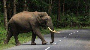 muthanga_wildlife_sanctuary20131127115800_12_2