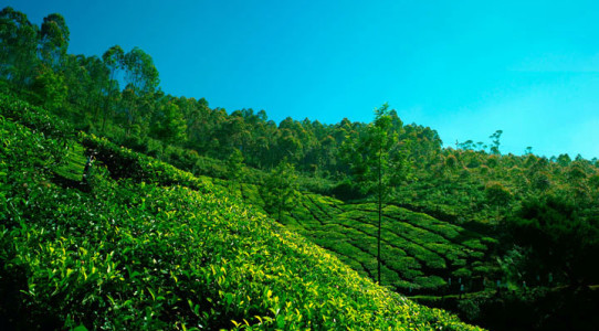 Greenface-of munnar-kerala-incredible-indian
