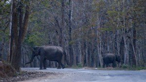 muthanga_wildlife_sanctuary20131127115800_12_1